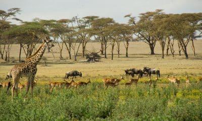 kenya - Crescent Island