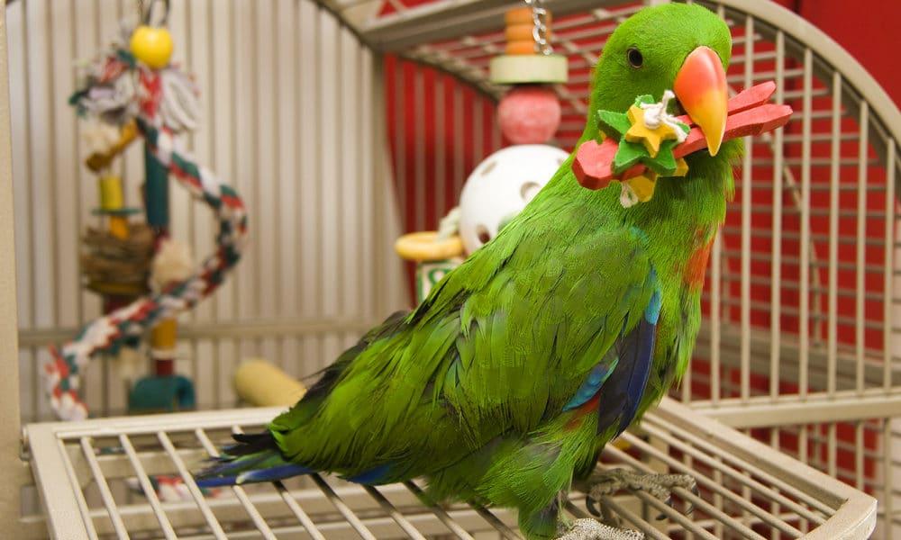 intoxications chez les oiseaux